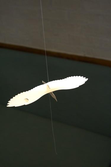 fsheltonphotosflybirdy