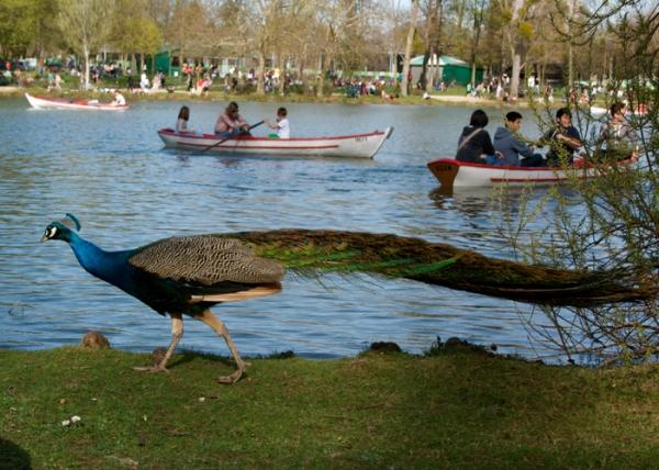 feliciasheltonphotographysundayinpark